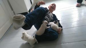 Her bliver jeg overfaldet af et kuld hundehvalpe. Det er fra da vi købte vores nye hund Kimberley, der er en Jack Russell terrier